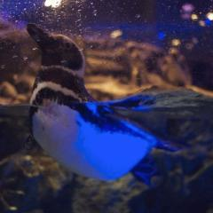 penguinhunny